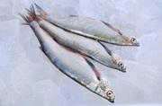 Купити рибу оптом. Плотва,  густера,  судак,  лящ,  окунь та ін.